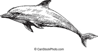 hand drawn dolphin illustration