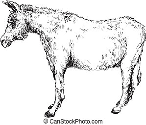 hand drawn donkey