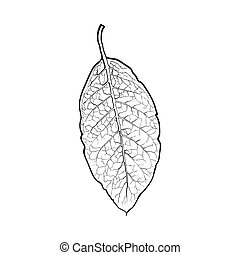 Hand drawn dry tobacco leaf, vector illustration on white...