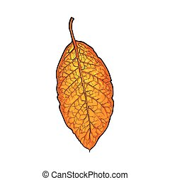 Hand drawn dry tobacco leaf, vector illustration on white background