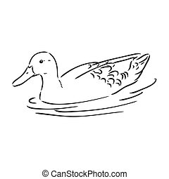 Hand drawn duck animal vector illustration. Sketch isolated on white background with pencil and label banner. duck, vector sketch on a white background