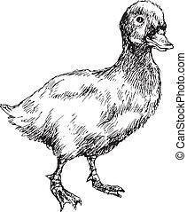 hand drawn duck illustration