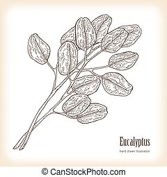 Hand drawn eucalyptus leaves. Vector illustration