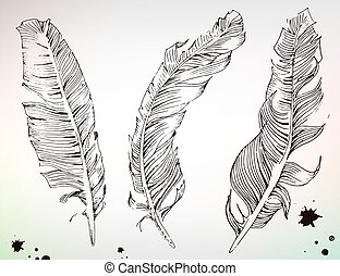 Hand drawn feather, engraving print