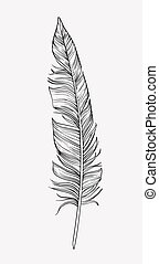 Vintage hand drawn delicate feather, vector illustration