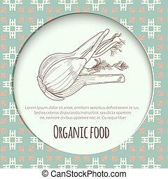 Hand drawn fennel over white background