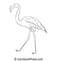 Hand drawn flamingo black outline sketch. Vector illustration