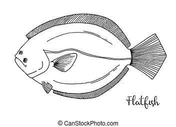 Hand drawn flatfish. Vector illustration in sketch style