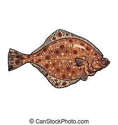 Hand drawn flounder, sketch style vector illustration