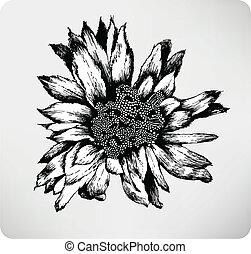 Hand drawn flower cactus Cereus peruvianas f. monstrosus