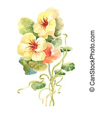 Hand drawn flowers isolated on white background