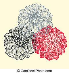 Hand-drawn flowers of dahlia - Three hand-drawn flowers of...