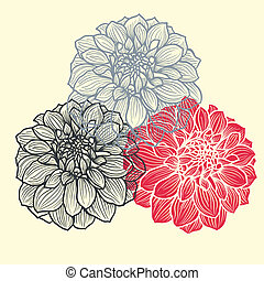 Hand-drawn flowers of dahlia - Three hand-drawn flowers of...