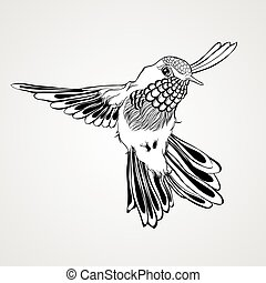 Hand drawn flying humming bird