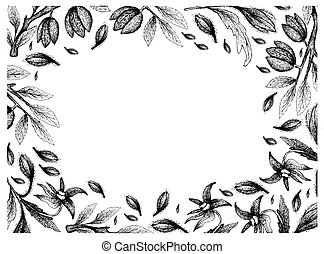 Hand Drawn Frame of Borage Seeds and Almonds - Illustration...