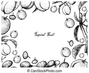 Hand Drawn Frame of Chinese Plums and Luna Nut Fruits