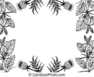 Herbal Flower and Plant, Hand Drawn Illustration Frame of Urtica Dioica or Stinging Nettle and Rhaponticum Carthamoides or Maral Root Plants, Used in Alternative and Folk Medicine.