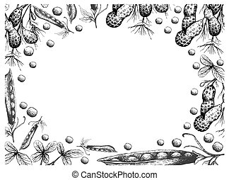 Hand Drawn Frame of Peanuts Plant and Snow Peas -...