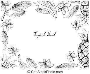 Hand Drawn Frame of Pineapple and Aglaonema Simplex Fruits -...