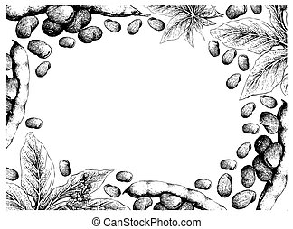Hand Drawn Freame of Fava Beans and Castor Beans -...