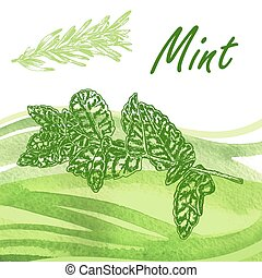 Hand drawn fresh mint. Vector illustration