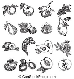Hand drawn fruits. Vector illustration. Fruit set in sketch style