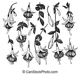 Hand drawn fuchsia flowers set