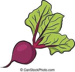 Hand drawn garden beet, vector