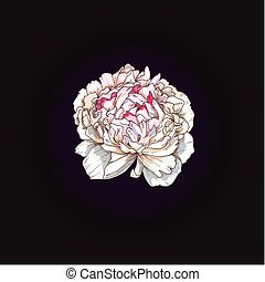 Hand drawn gently pink peony bud isolated on black background. Botanical vector