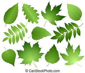 green leaves and branches set