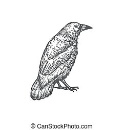 Hand Drawn Halloween Scary Crow or Raven Vector Illustration. Abstract Sitting Bird Sketch. Engraving Style Drawing.