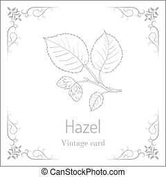 Hand drawn hazelnut branch. Botanical vector illustration.