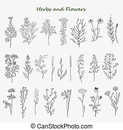 herbs and flowers - Hand drawn herbs and flowers set of ...