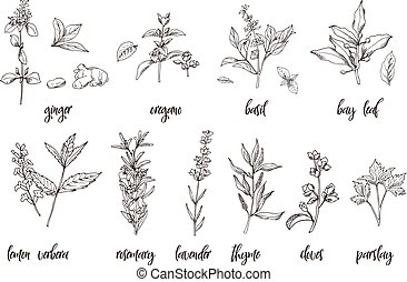 Hand drawn herbs and spices. Decorative background with sketch elements. Vector illustration