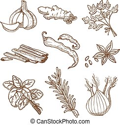 Hand Drawn Herbs And Spices Set - Hand drawn herbs leaves ...
