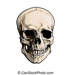 Hand drawn human skull, anatomical model, sketch style...