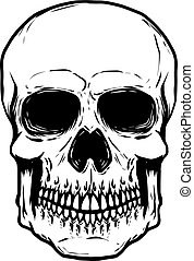 Hand drawn human skull isolated on white background. Vector illu