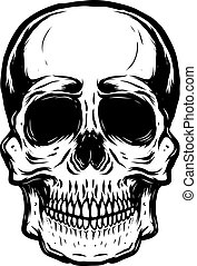 Hand drawn human skull on white background. Vector illustration