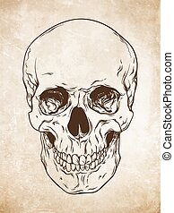 Hand drawn human skull vector