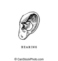 Hand drawn icon of human sense of Hearing in engraved style....
