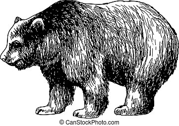 hand drawn illustration of bear