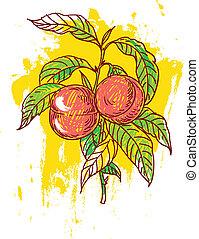 hand drawn illustration of ripe peaches