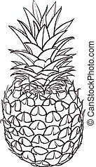 Hand drawn illustration of pineapple. Vector picture