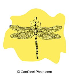 Hand drawn illustration with Black dragonfly.