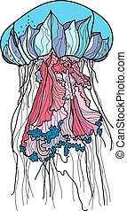 Hand drawn Jellyfish vector illustration. - Hand drawn...