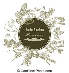 Hand drawn kitchen herbs and spices