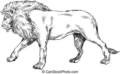 hand drawn lion