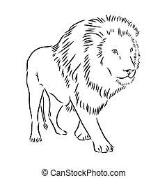 Hand drawn lion. Sketch, vector illustration. wild animal