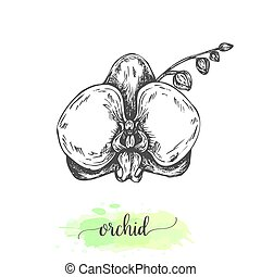 Hand drawn lotus flowers. Floral background with blooming waterlilies isolated on white. Vector illustration in vintage style. Sketch of tropical flower Outline waterlily