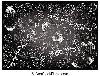 Hand Drawn Lotus Root and Jackal Jujube Fruits on Chalkboard...